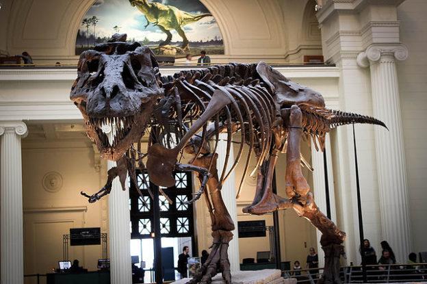 Un squelette de tyrannosaure dans un musée