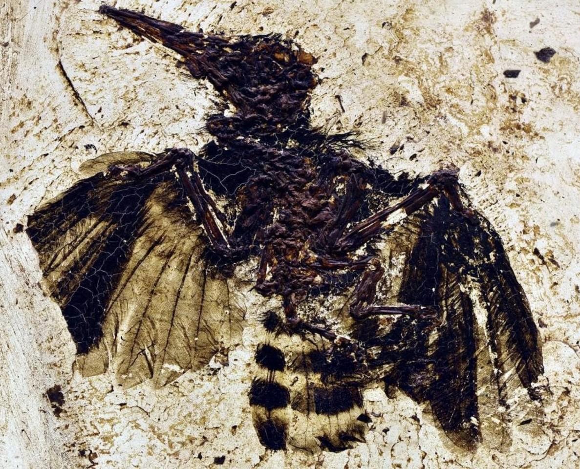 Paléontologie : Fossil Week 2018
