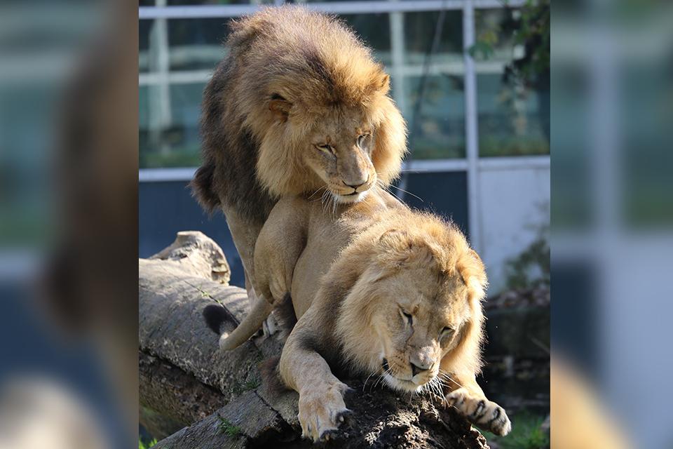 Homosexualité chez les animaux