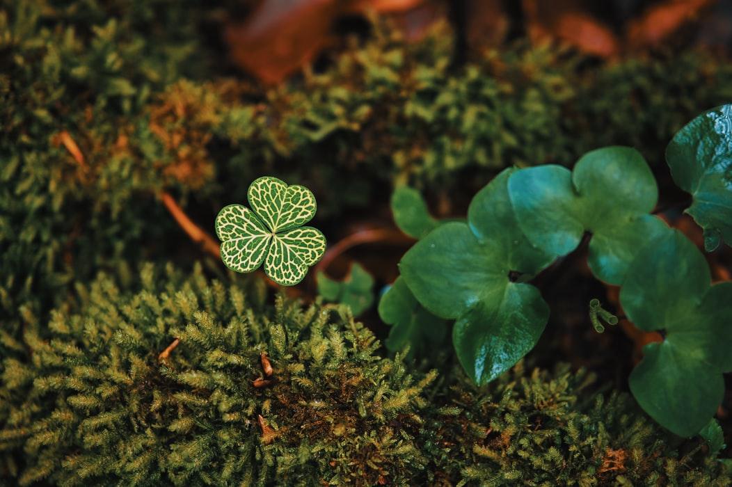 Nature, vert
