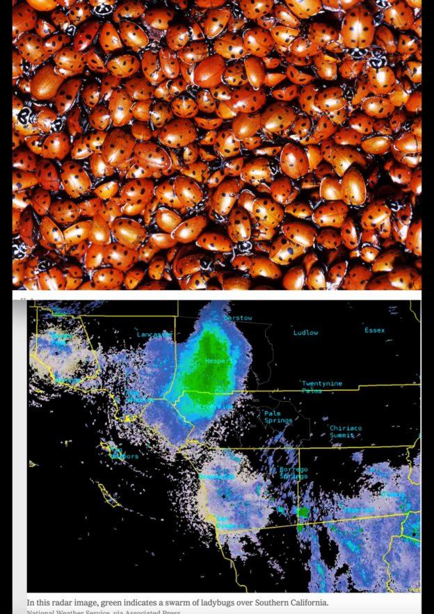 Carte du Sud de la Californie montrant plusieurs taches vertes, notamment une grande sur la ville d'Hesperia.