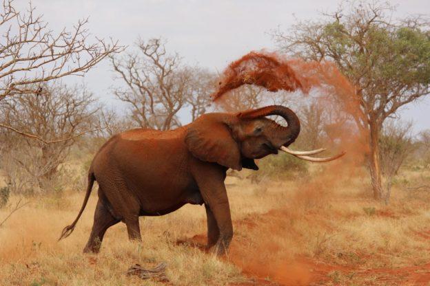éléphants Afrique Botswana